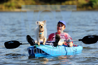 Jeb Wallace-Brodeur / Staff Photo Lola rides on the front of a kayak while taking an afternoon outing with her owner Mitch Curren of East Montpelier Wednesday on Wrightsville Reservoir in Middlesex.