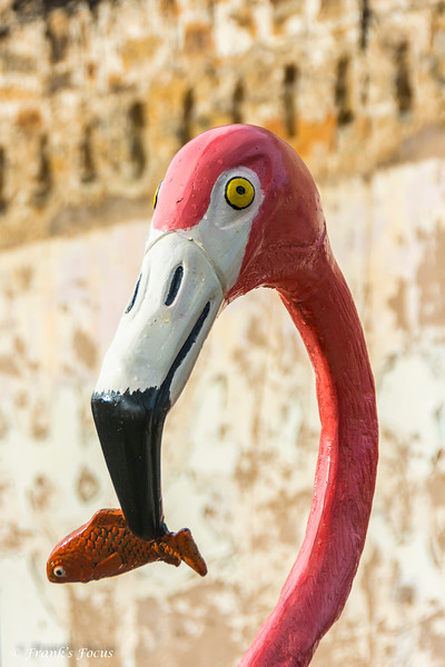 August 7, 2018 -- Flamingo's Dinner