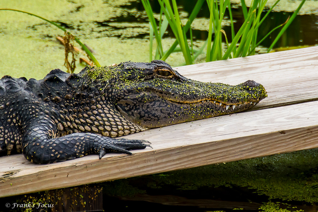 May 8, 2018 -- Sunning Time