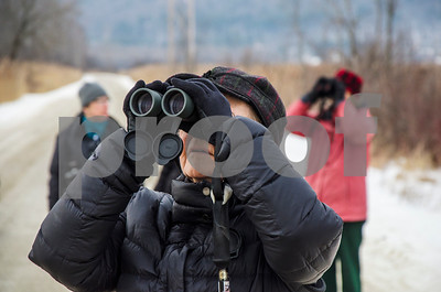 Robert Layman / Staff Photo  Sue Wetmore, Director of the Rutland County Aubudon Society, bird watches at the West Rutalnd Marsh Thursday morning, Jan. 11, 2018. Wetmore and other Aubudon members met for their monthly walk and recorded 20 species -- the highest being mourning doves at 72.