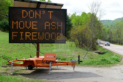 Jeb Wallace-Brodeur / Staff Photo A new warning sign on Route 110 between Washington and Chelsea warns people not to transport ash wood due to concerns about the spread of the Emerald Ash Borer.