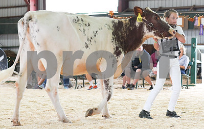 Jaymie Landon, 11, of West Pawlet, walks with her milking shorthorn cow as its judged during a showing at the Vermont State Fair Friday morning. (Robert Layman / Staff Photo)