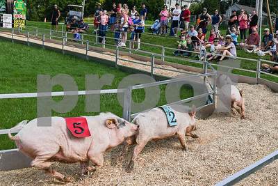 Spectators line the hillside to watch a pig race at the Vermont State Fair Thursday afternoon.(Robert Layman / Staff Photo)