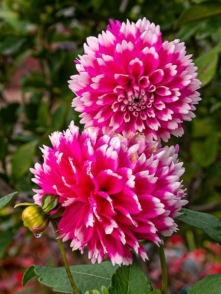 November 6, 2019 -- Last Flower
