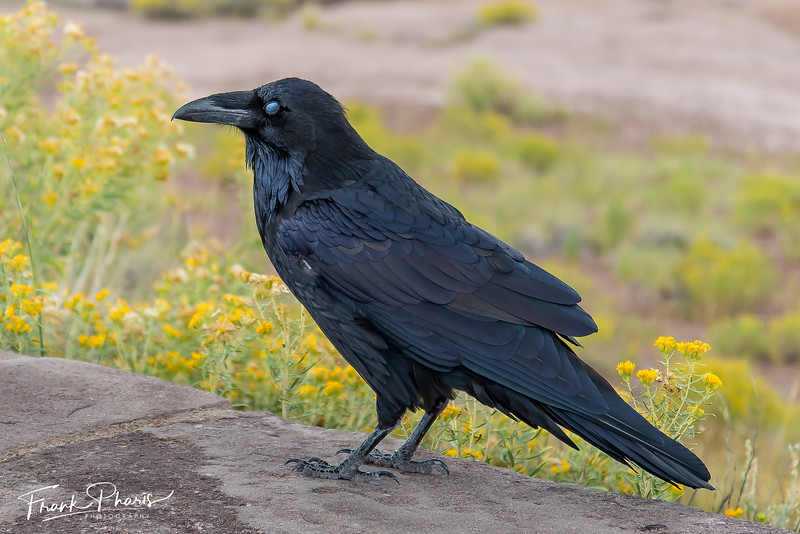 March 23, 2019 -- The Raven