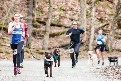 Runners and their canine companions approach the finish line of Sunday's annual Mutt Strut race at Little River State Park.