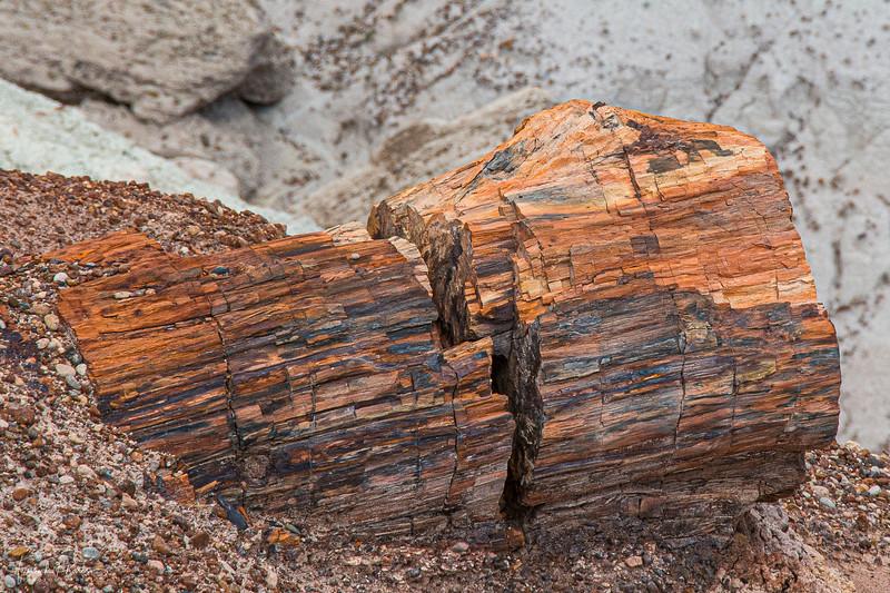 June 27, 2020 -- Petrified Log