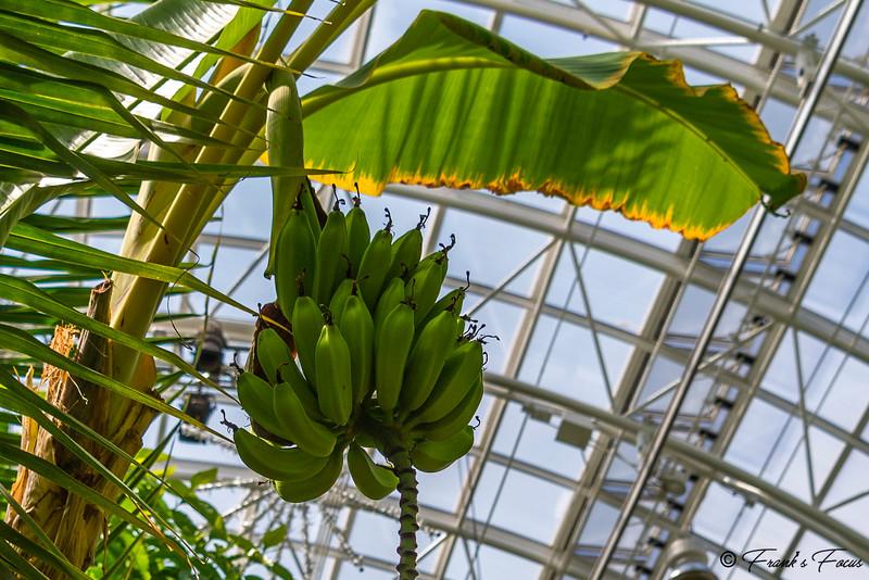 October 13, 2021 -- Going Bananas