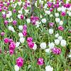 April 1, 2021 -- Spring Blooms