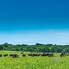 September 30, 2021 -- Home on The Range, Where the Buffalo Roam