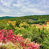 January 13, 2021 -- Fall Color in The Ozarks
