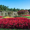 April 16, 2021 -- Biltmore Rose Garden