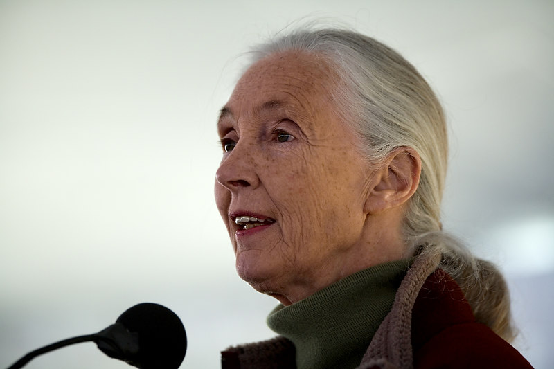 <h3>Jane Goodall</h3> At the Franklin Park Zoo in Boston on Earth Day.  22 April 2006