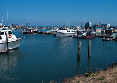 8/9   Westport Marina on Grays Harbor