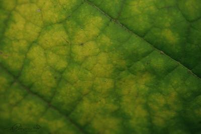9/28   Close Up Large Leaf