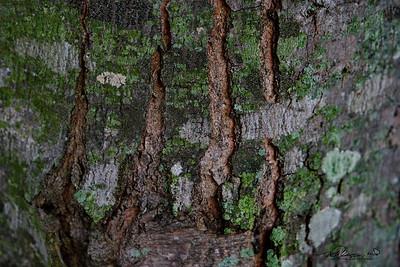 9/6   Interesting Bark Patterns