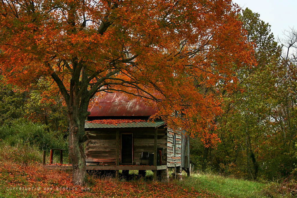 November 1, 2007<br /> <br /> IMG_3935b Log Cabin in the Fall Colors<br /> <br /> A lovely (but small) log cabin covered in orange.