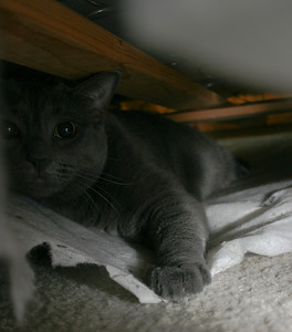12/24 This is a picture of my cat, who found his way into my box spring mattress.