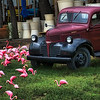 "May 2, 2009 - ""Flamingo Road"" - This photo was a target of opportunity this week. I shot it from the car while we were at a stop light in Austin, Texas.  Luckily, I was not driving and it was a long red light."