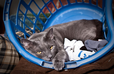 December 22, 2009 Laundry Day. Dynamo was helping...