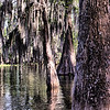 "April 25, 2009 - ""Deep In The Swamp"" - There was an eerie calm as we floated through this area.  This photo was taken 1 hour before yesterdays storm shot.  Maybe I should have titled this ""The Calm Before The Storm"" :)"