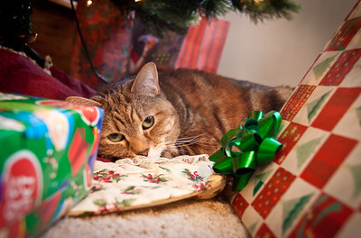 December 25, 2011 - This is Izzy, my parent's cat.  Just another present under the tree...