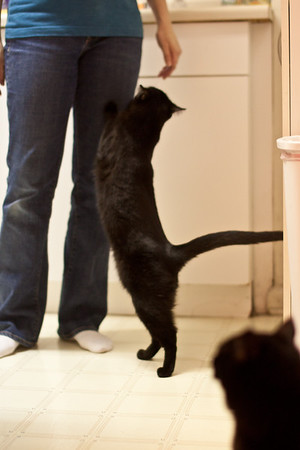 Dec 10, 2012 - Kristina's cats begging for dinner.