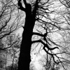 """10-31-2012<br /> """"Ghosts and Goblins All Around""""<br /> <br /> I saw this tree on my trip to the mountains and immediately thought it would make a good photo for Halloween.  It almost looks like the ghost is rising out of the tree with uplifted arms.  No matter, I liked the spooky look!    It also reminded me of """"Lord of the Rings.""""<br /> <br /> Thank you for your comments on my pink camera bag.  I use this one when I only want to carry some of my equipment.  I've been going through the photos of the Smoky Mountains and the beauty is unbelievable.  I will post a few as I go and then hopefully set a gallery for all of the ones I liked.<br /> <br /> Critiques and comments are always welcome.<br /> Happy Halloween!  May all of your ghosts and goblins visit you for """"trick or treat"""" tonight.<br /> Donna"""