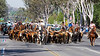 Git along lil' doggies<br /> <br /> (April 20, 2013) My favorite parade today! Norco Horseweek started off with a cattle drive.