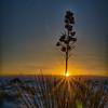 Sunrise Rays Burst On The Desert