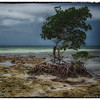"June 4, 2013 - ""Survivor""<br /> <br /> - at Bahia Honda State Park in the Florida Keys"