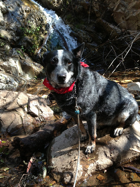 Pathos<br /> <br /> (March 178, 2013) The not so happy camper and I went on a Meet-Up hike in Trabuco Canyon. Very pretty, good company, but Gracey would have preferred Sycamore Canyon. At least there I don't make her sit on a rock in the water to take a photo with my phone.