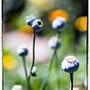 """May 6, 2013  - """"Bulbs"""""""