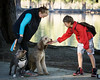 Love at first pet<br /> <br /> (December 18, 2016) Down at Fairmount Park yesterday, this young man was eager to introduce himself to a new old friend.