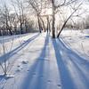 long shadows & short days