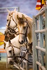 Day of the Horse<br /> <br /> (December 13, 2017) Apparently today is the day of the horse . . . so here are a few, all with personality.