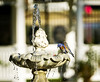 Spa Day <br /> <br /> (November 29, 2017) The fountain in the rose garden at Fairmount Park is a marvel for the birds that are passing through right now.