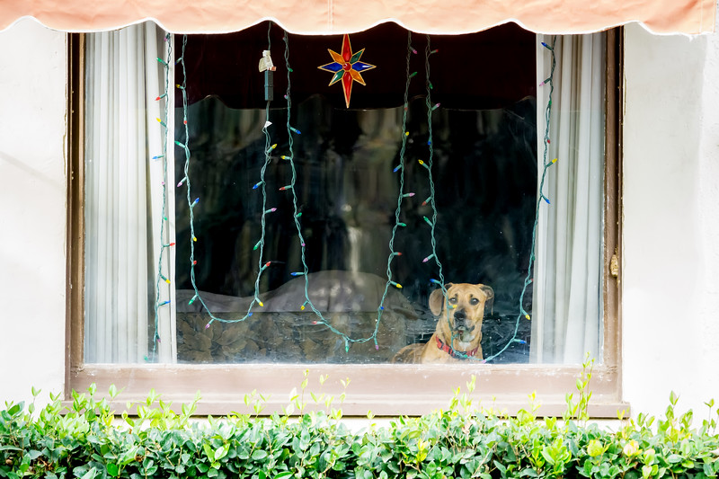 Christmas Decoration<br /> <br /> (December 12, 2017) Somebody has to guard the Christmas spirit.