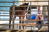 Picnic with a friend<br /> <br /> (November 26, 2017) This might be my favorite shot from yesterday's gymkhana. This big guy was fishing carrots out of the cooler and enjoying watching the barrel racing with his owner and best friend.