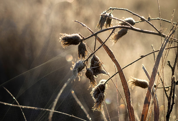 The sun is higher now so we loose the golden tones & the frost begins to melt, signalling the end of the photo op .... besides that, my fingers by now are beginning to seriously ache, so time to pack it all in and warm up by the fire.... 12/05/18