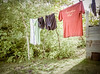 There's just something about a well used clothesline .... somehow comforting, I think...