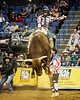 Classic Man<br /> <br /> (December 4, 2018) Aaron Williams on Classic Man. I'm filling in some recent galleries from last month. Love these high flying bulls! No score for the rider, 43 points for the bull.