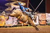 Horse of the Moment<br /> <br /> (December 13, 2019) Miss Nancy is out again tonight at the WNFR with Spencer Wright. This is the same match up at this year's Norco Mounted Posse Rodeo. It's the Day of the Horse, and she is the horse of the moment in my book.
