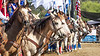 The Line-Up<br /> <br /> (October 12, 2019) It was a good day for a rodeo at San Dimas, and for flags and horses and a little bit of pageantry.
