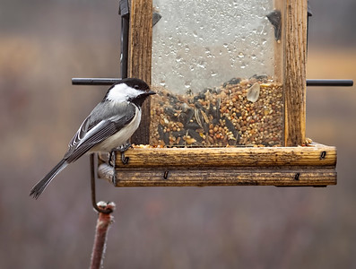 Our tough little chickadees stay here all winter long… I don't know how they do it! 04/18/19