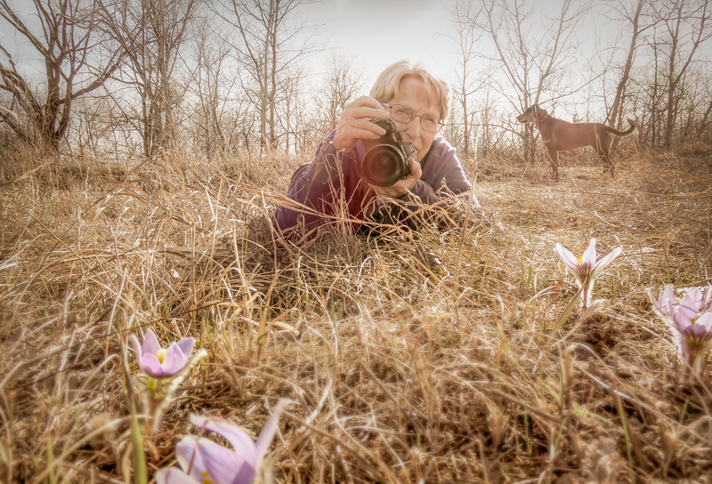 Springtime with the crocus