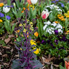"""March 14, 2019<br /> """"Many Colors""""<br /> <br /> There are so many colors that greet me as I look out the door.<br /> <br /> Thank you for commenting on my photos.<br /> Donna"""