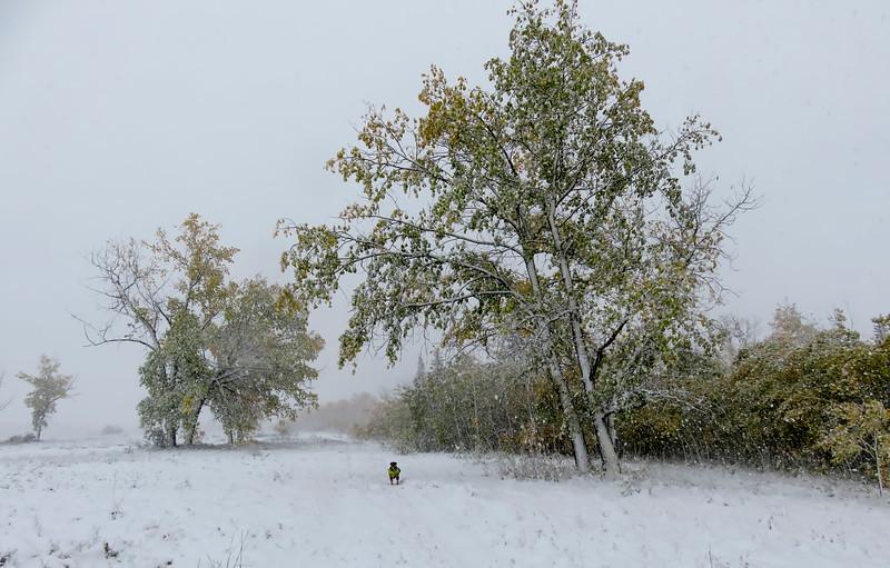 One last wintery photo