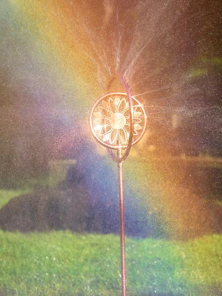 Sprinkler delight!