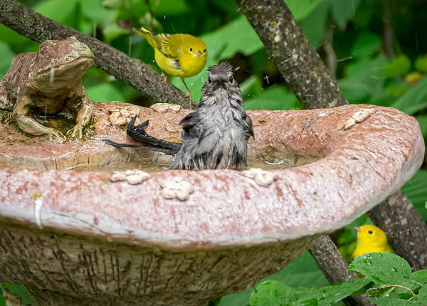 Line up at the bird bath